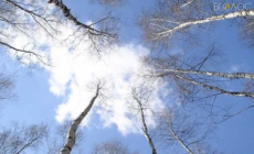 На Житомирщині очікується потепління до +19