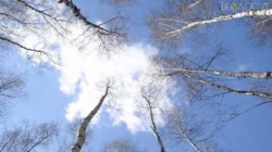 Якою буде погода на Житомирщині 29 жовтня