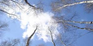 Якою буде погода на Житомирщині 22 вересня