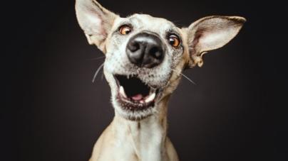 Конкурс! Власники котів та собак можуть виграти подарунок для свого улюбленця