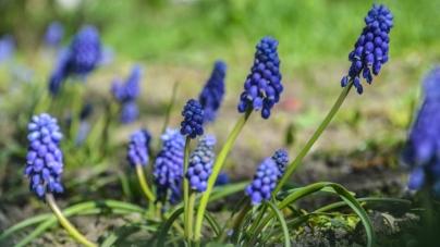 У Житомир повернулася весна (ФОТО)