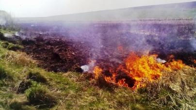Більше 200 гектарів сухої трави горіло в області з початку року