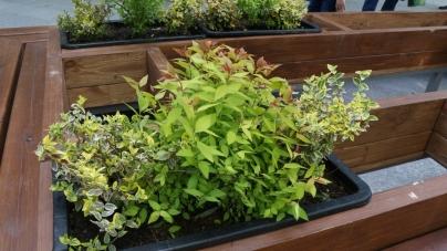 32 ящики із карликовими рослинами будуть прикрашати Михайлівську (ФОТО)