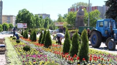 """Краса: на центральній клумбі Житомира""""Зеленбуд""""висаджує квіти (ФОТО)"""