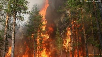 У п'ять разів зросли штрафи за порушення правил пожежної безпеки в лісах