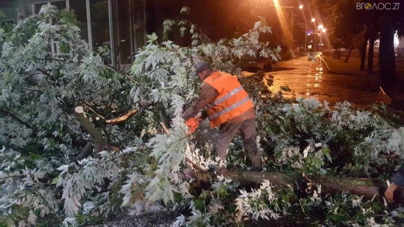 Житомир: шквальний вітер потрощив дерева по всьому місту