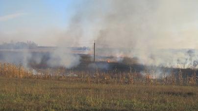На Житомирщині півдоби горіло болото площею понад 24 гектари