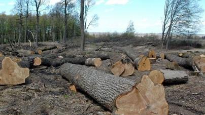 """Майже 10 мільйонів збитків завдали """"чорні"""" лісоруби лісам області"""