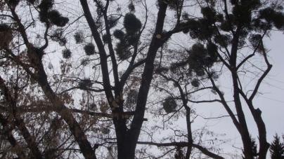Житомир: майже 2000 дерев видалили комунальники за півтора роки