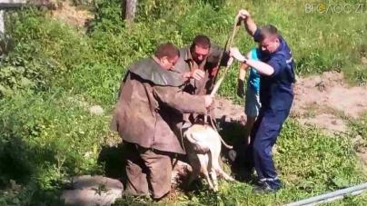 У Новограді рятувальники витягали з каналізації козу