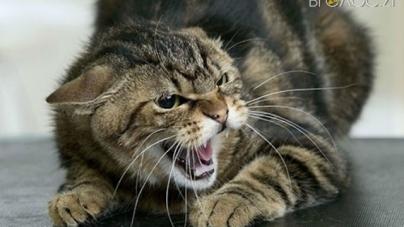 У Малині скажений кіт накинувся на жінку та покусав її
