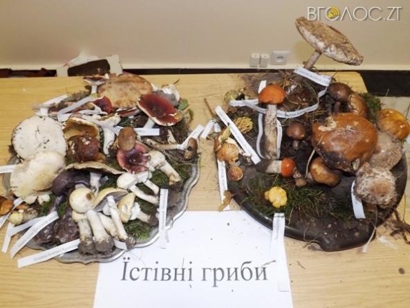 В Агроуніверситеті відкрили виставку «живих» грибів, які зібрали у Корбутівському військовому лісництві (ФОТО)