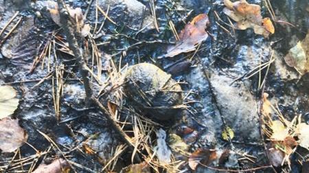 У Денишах на дні річці рибалки знайшли боєприпаси