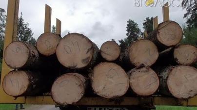 Незаконні рубки лісів з початку року завдали Житомирщині шкоди майже на півтора мільйона гривень