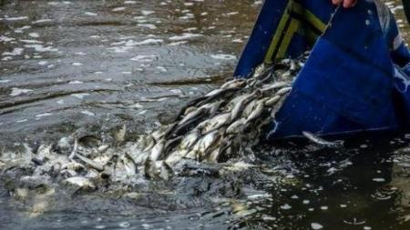 Житомирський рибоохоронний патруль заповнить водосховище рибою, яка їсть водорості