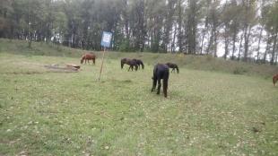 Житомирщина: на території бази боєприпасів гуляють дикі звірі та випасають худобу, – військова прокуратура