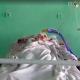 У Малині жорстоко побили та залишили вмирати на вулиці 17-річну дівчину