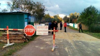 """На півроку у селі на Житомирщині заборонили """"заводити"""" свиней. Через африканську чуму"""