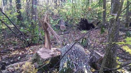 """Стрілянина: 20 """"чорних"""" лісорубів із закритими обличчями напали на лісову охорону"""