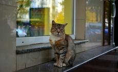 Житомиряни просять заборонити продаж собак та кішок в зоомагазинах міста