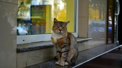 """Петиція з проханням визнати бездомних котів «повноправними жителями міста» за 5 днів набрала необхідні """"голоси"""""""