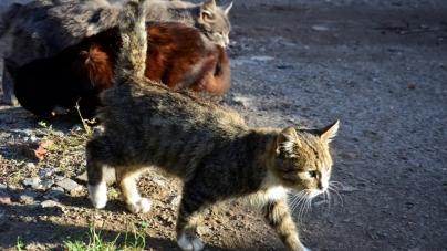 Житомирянка скаржиться на котів, собак та нерезультативність Центру захисту тварин