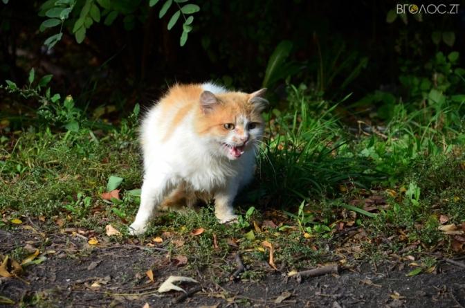 За два тижні у Житомирі стерилізували 236 безпритульних котів та кішок