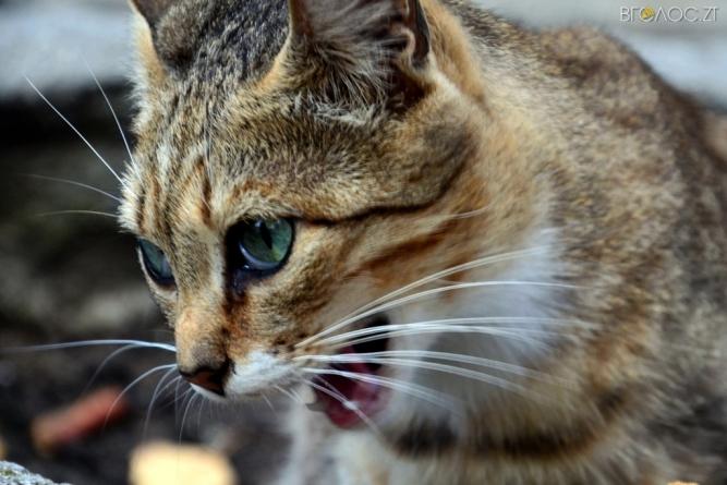 Наймиліші безпритульні котики – на вулицях Житомира (ФОТО)