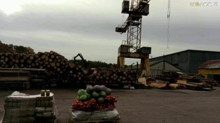 Лісівники області зібрали та відправили допомогу бійцям АТО (ФОТО)