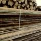 Малин: лісгосп платив зайві премії працівникам та продавав деревину за заниженими цінами, – аудитори