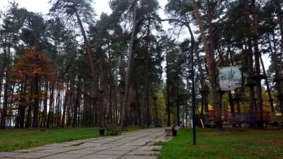 Житомиряни б'ють на сполох: у гідропарку масово сохнуть дерева