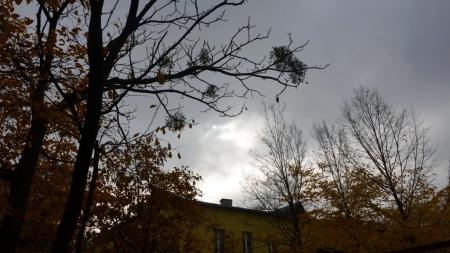 Синоптики розповіли, якою буде погода на Житомирщині 21 січня