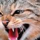 З початку року в області на сказ захворіли 29 тварин. Переважно лисиці та коти