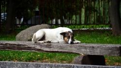 Житомирянка просить міськраду вбивати безхатніх собак