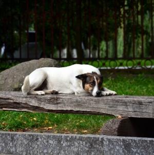 Студент просить міську раду створити сучасний притулок для тварин у Житомирі