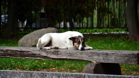 Найлюдяніші собаки – на вулицях Житомира (ФОТОРЕПОРТАЖ)