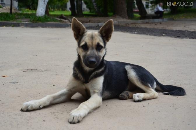 Житомирянка пропонує в обов'язковому порядку стерилізувати домашніх собак, які не мають паспортів