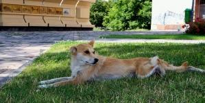 На Малікова у Житомирі облаштують майданчик для вигулу собак