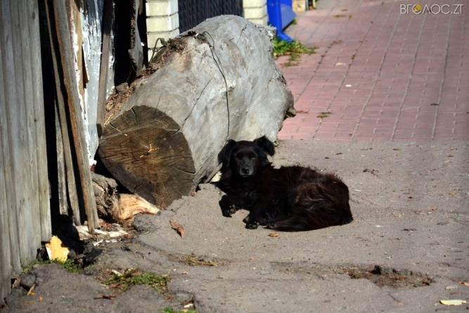 В Овручі витратять 125 тисяч на безпритульних тварин