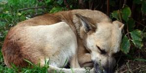 Бердичівська поліція шукає чоловіка, який жорстоко побив бездомного собаку