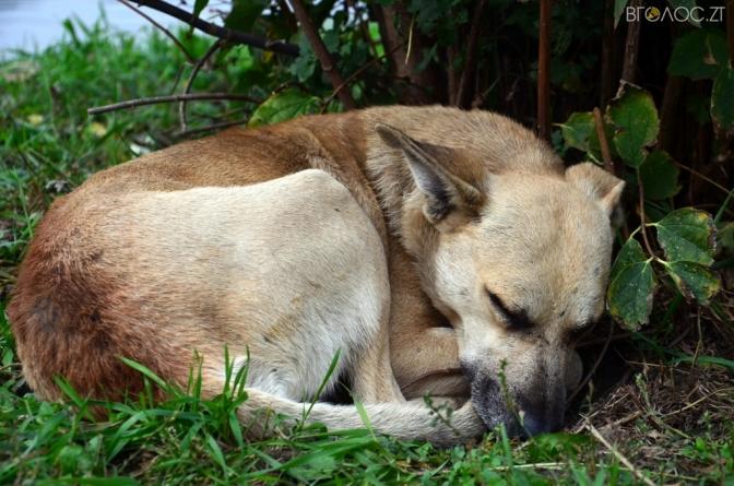 Житомирянин вимагає у міськради: відловлювати бездомних собак і тримати їх за межами міста