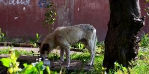 У Житомирі порахували безпритульних собак