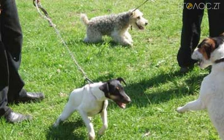 Де у Житомирі планують облаштувати 5 майданчиків для вигулу собак (АДРЕСИ)