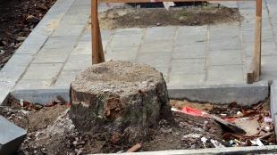 Ноу-хау: у Житомирі на Театральній пеньок обклали новою плиткою (ФОТО)