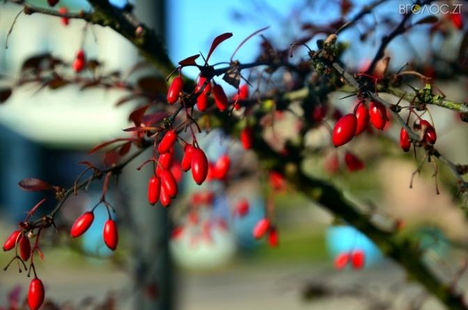 Синоптики розповіли, якою буде погода на Житомирщині 30 жовтня