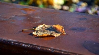 Синоптики розповіли, якою буде погода на Житомирщині 12 листопада