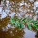 На Житомирщині знову прогнозують дощі