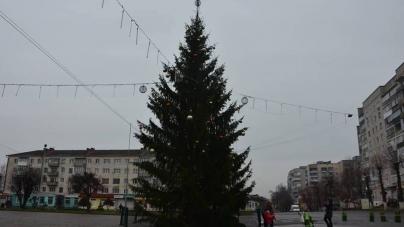 Стало відомо, у скільки обійшлася головна новорічна ялинка Новограда