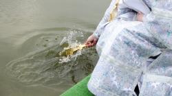 Як святили воду Тетерева та пірнали в ополонку житомиряни (ФОТО)