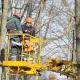 """У скверах триває кронування: комунальники продовжують """"життя"""" дерев на 10-15 років"""